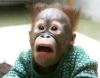Terrified monkey