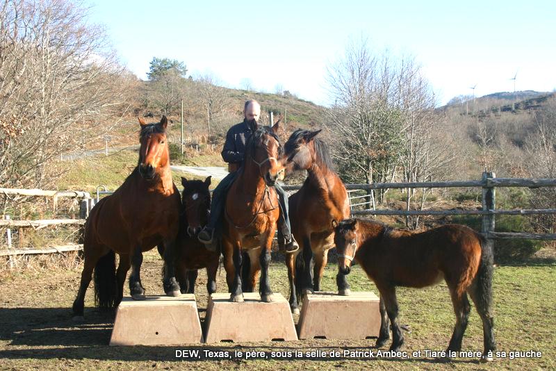 Chevaux race Auvergne - Elevage de l'Arn