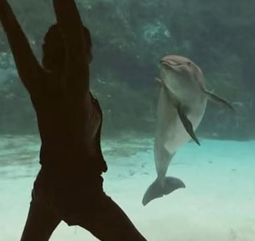 Dolphin acrobat