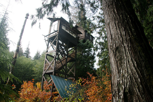 treehouse hotels treehouses trees Cedar Creek Treehouse Washington