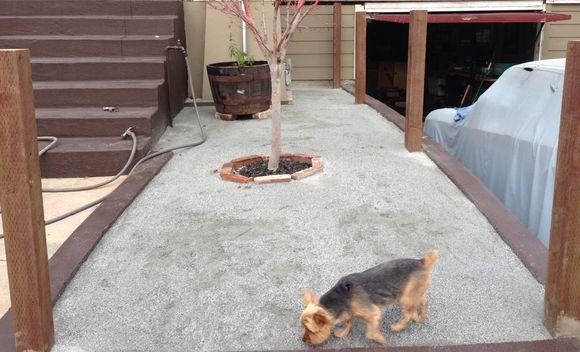 Front yard progress