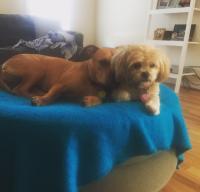 Roux & Sunny