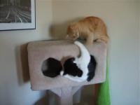 Kitties_catnip4