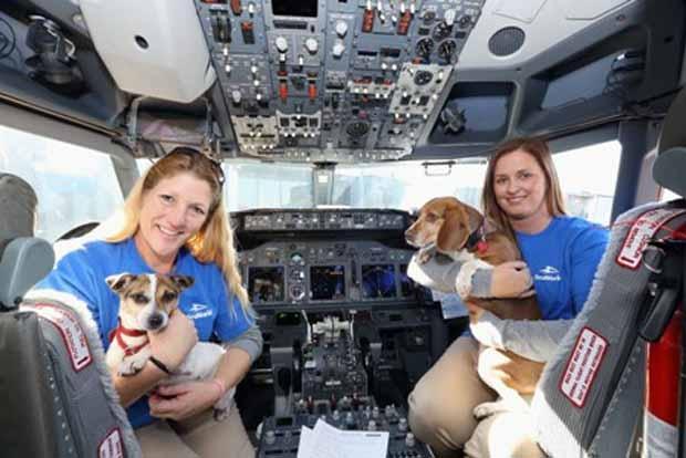 Perros viajan en avion