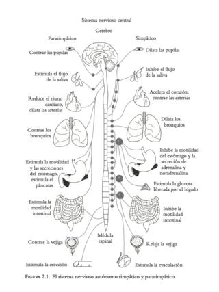 Sistema nervioso simpatico parasimpatico