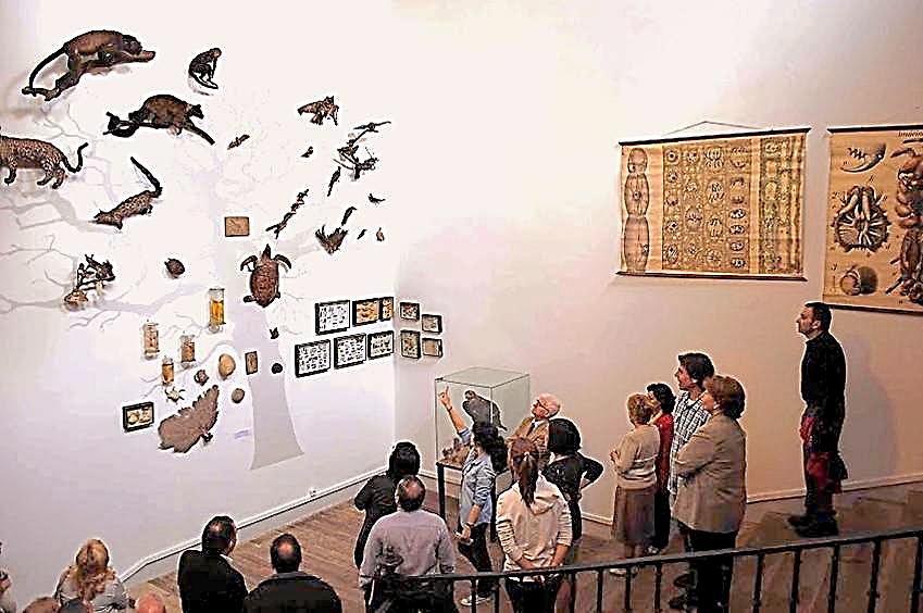 Estudiantes del IES 'San Isidro' mostrando los fondos del Museo a los visitantes | Rafael Martín Villa
