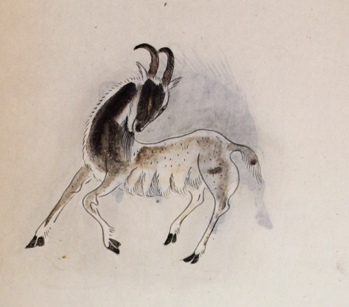 "Illustration from the album ""Coloured Drawings of Chinese Flora and Fauna"", 18th century, China (BL Sloane collection Add. 15503, f.10)"