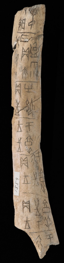 Shang dynasty oracle bones, c. 1600 to 1050 BC Or.7694/1559 and Or.7964/1560