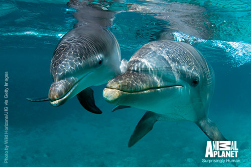 Dolphin-500w