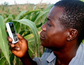 Ghana_farmer on cell phone