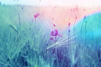 Meadow-2369426_640