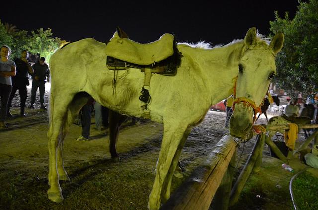 Donkey sanctuary skinny horse