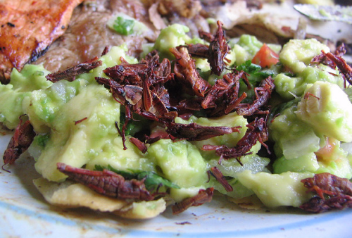 guacamole and chapulines (crickets)